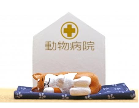新しい街でかかりつけ動物病院の見つけ方と注意点