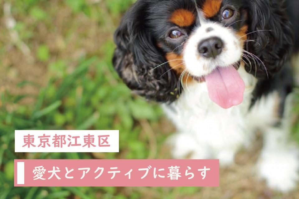 東京都江東区で愛犬とアクティブに暮らす