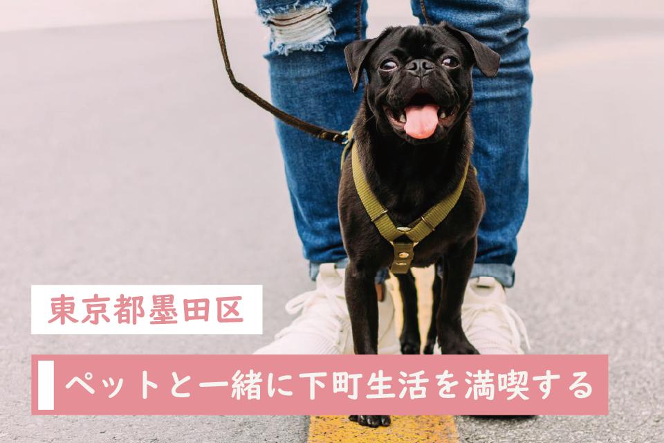 東京都墨田区で愛犬と一緒に下町生活を満喫する