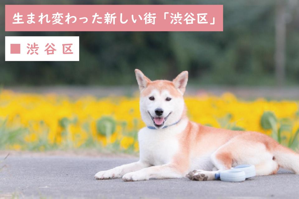 生まれ変わった新しい街「東京都渋谷区」でペットと生活しよう