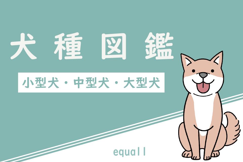 犬種図鑑|小型犬・中型犬・大型犬の飼い方・飼育費用・特徴・性格・暮らしデータ