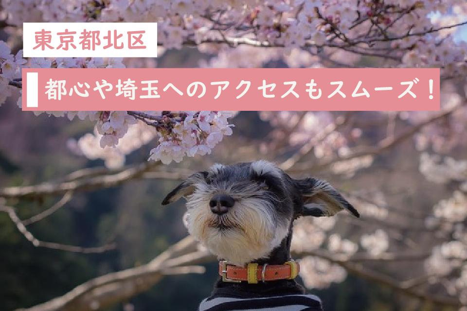 都心部や埼玉方面へのアクセスがスムーズ!東京都北区でペット暮らす