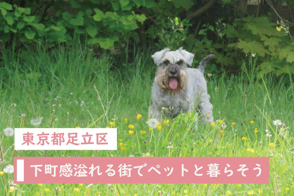手ごろな賃料と下町感溢れる東京都足立区でペットと暮らす