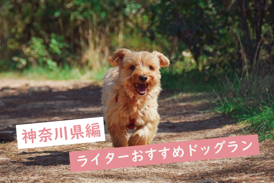 【神奈川】ワンちゃんも嬉しい!ライターがおすすめするドッグラン5選!営業時間や料金も紹介