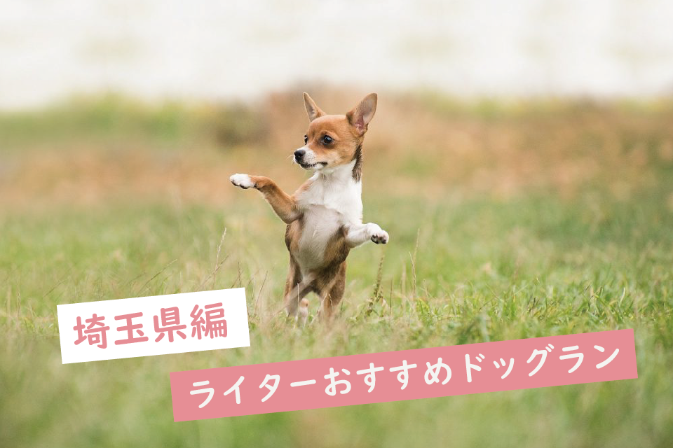 【埼玉】ワンちゃんも嬉しい!ライターがおすすめするドッグラン6選!営業時間や料金も紹介
