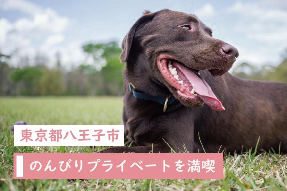 のんびりプライベートを満喫できる東京都八王子市でペットと暮らそう