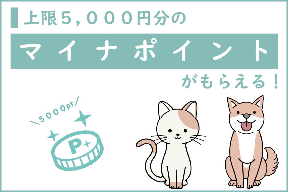 ペット飼育者も嬉しい!マイナポイントで上限5,000円がもらえるキャンペーン開催!マイナンバーを作っておトクにお買い物しよう