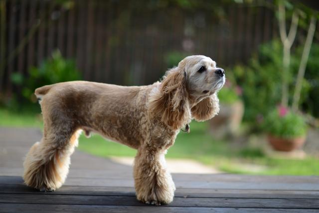 の 中型 種類 犬