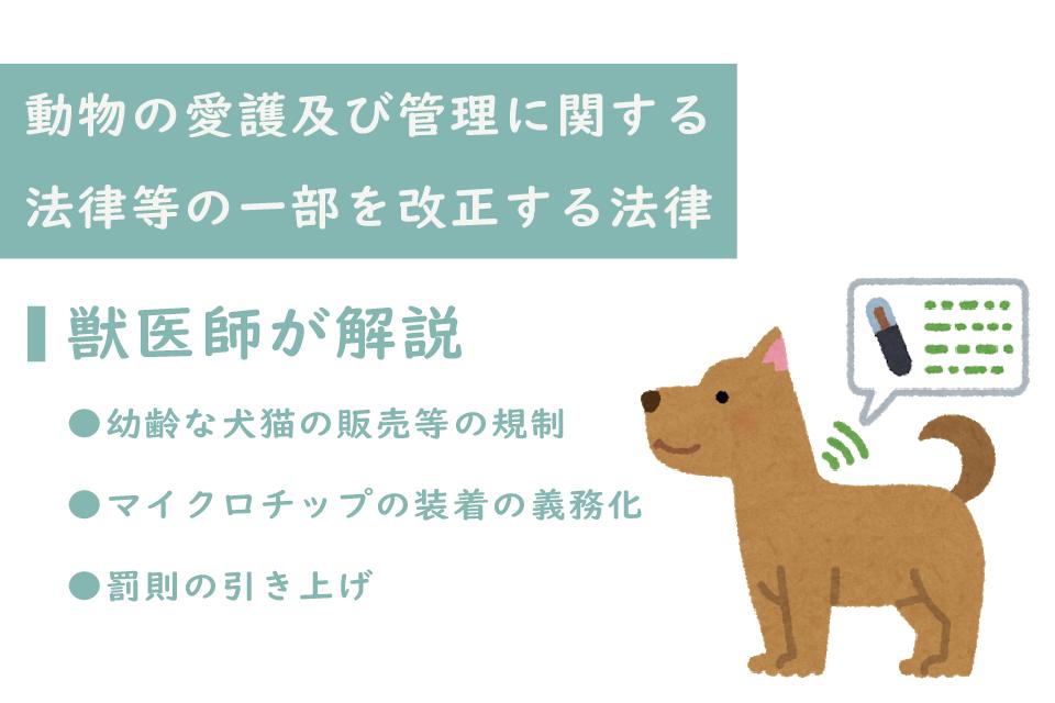 獣医師が解説「動物の愛護及び管理に関する法律等の一部を改正する法律」