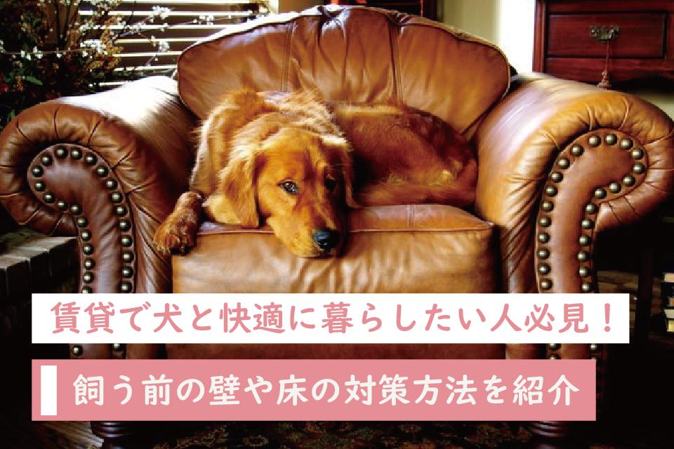 賃貸で犬と快適に暮らしたい人必見!飼う前の壁や床の対策方法を紹介