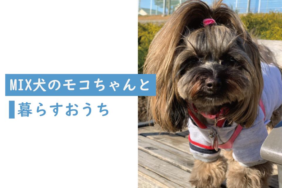 MIX犬のモコちゃんと暮らすおうち