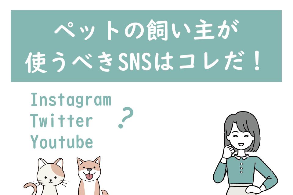 インスタ映えはもう古い!?ペットの飼い主が使うべきSNSとハッシュタグはコレ!Youtube・Instagram・Twitter・TikTokを解説
