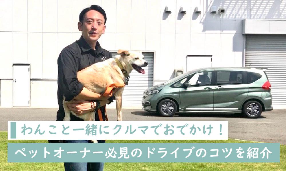 わんこと一緒にクルマでおでかけ!ペットオーナー必見のドライブのコツを紹介|Honda Dog