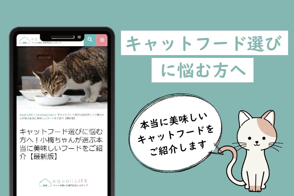 猫用キャットフード選びに悩む方へ!選び方や購入方法を解説します!今話題のフードもご紹介【最新版】