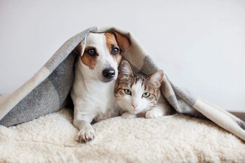 【最新版】2020年犬猫飼育頭数は減少傾向!コロナウイルスと2021年見通しを解説